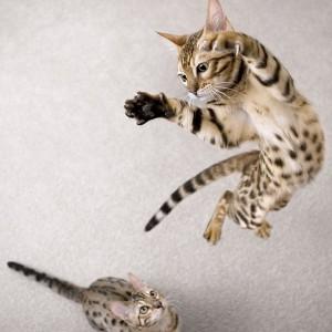 котята играют фото