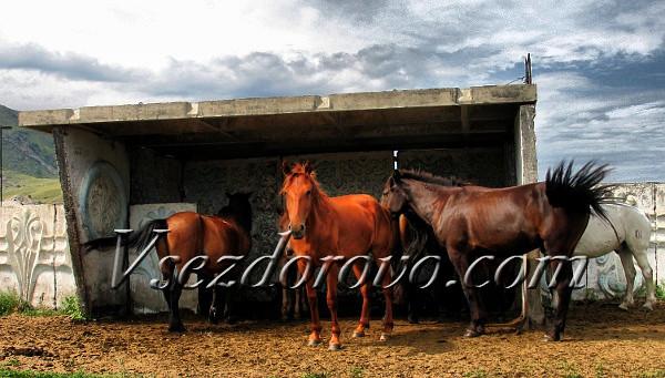 Рыжие лошади