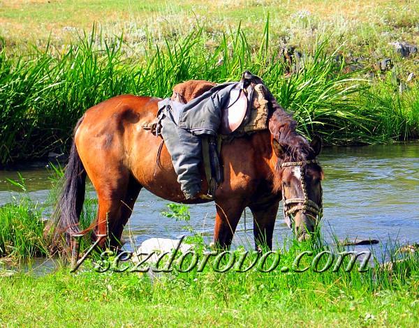 рыжая лошадь на ручье