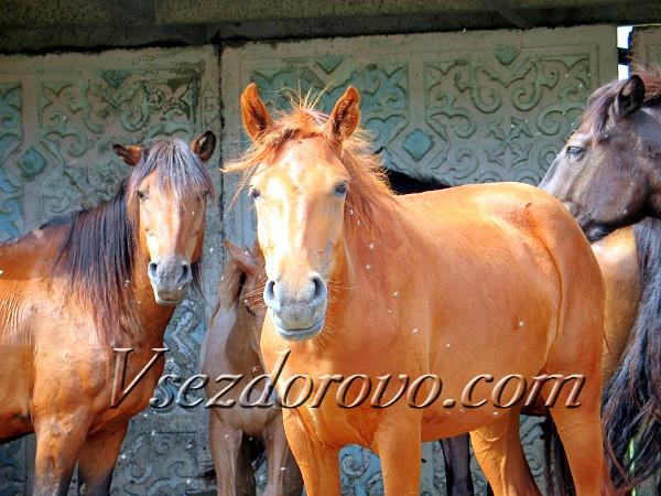 Рыжая лошадь крупным планом