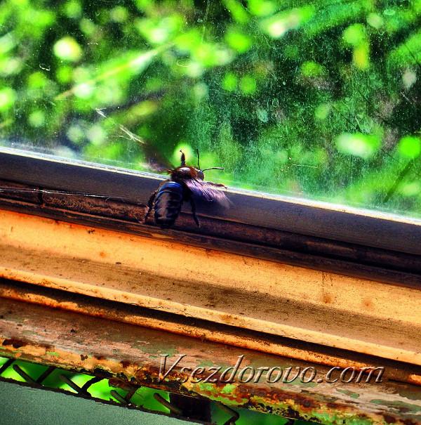муха за стеклом