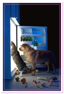 можно ли кормить кошек и собак тем, что едят люди?