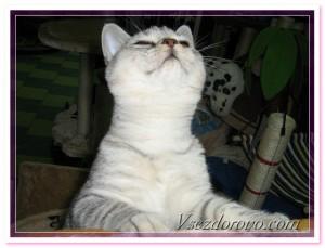 котенок выпрашивает лакомство