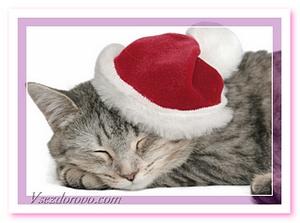 кот в новогодней шапочке фото