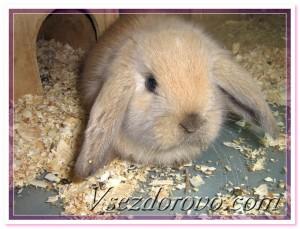 как держать кролика дома