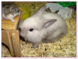 как держать кролика в квартире