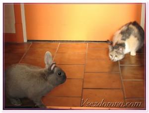 кот и кролик - символы 2011 года