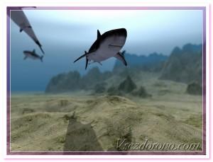 акула 3д