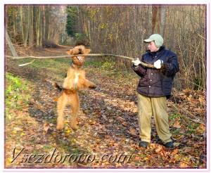 мальчик играет с собакой на природе осень листопад фото