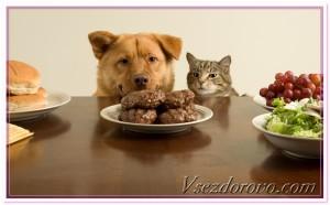 кот и пёс клянчат котлету