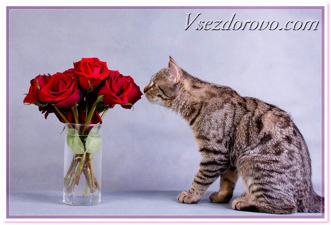 цветы и кошки фото: