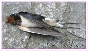 мертвая птица фото
