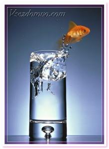 золотая рыбка в стакане воды