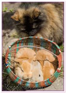 кот и кролики фото