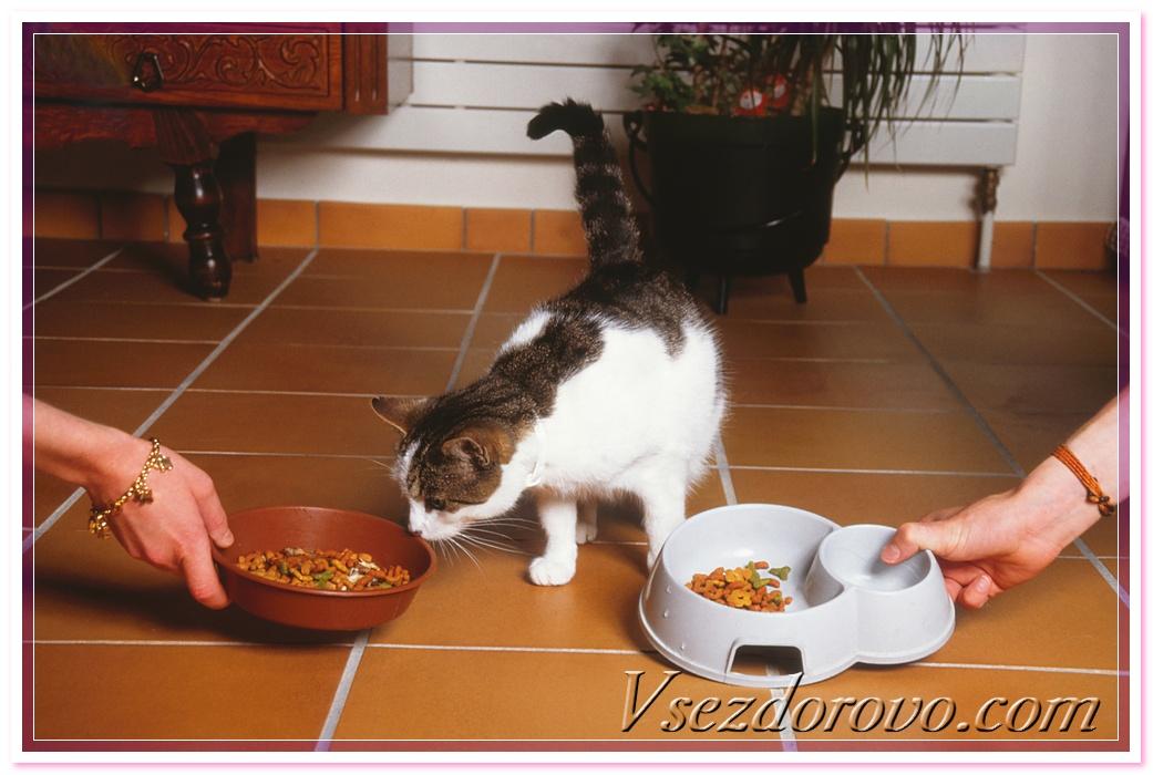 Сухие корма для животных вред или