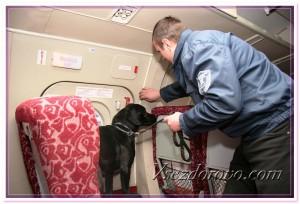 Сотрудник службы безопасности с собакой фото