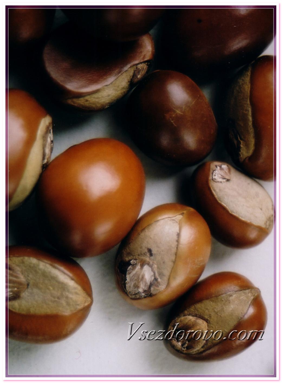 Семена плодов дерева ши фото