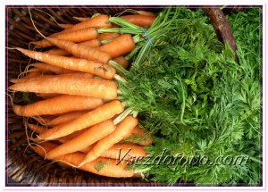 Свежая морковь фото