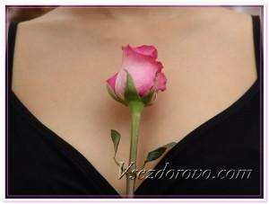 Женская грудь и роза фото