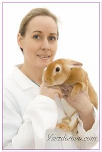 Женщина-ветеринар с кроликом фото