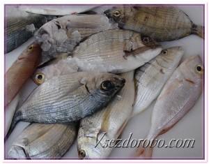 Разные виды рыбы фото
