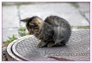 Котенок на канализационном люке фото
