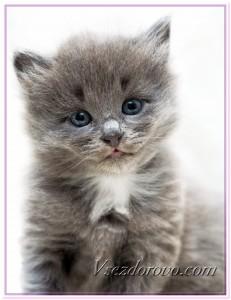 Маленький серый котенок фото