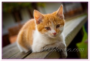 Котенок лежит на скамейке фото