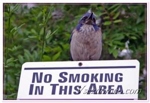 """синяя птица на табличке """"не курить"""" фото"""