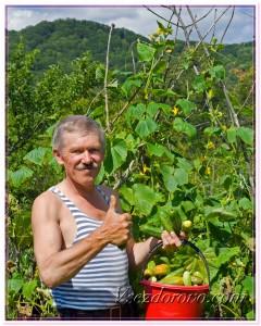 Пожилой мужчина работает в огороде фото