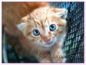 Котенок в переноске фото
