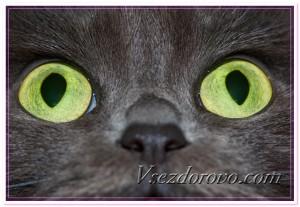 Черная кошка с зелеными глазами фото