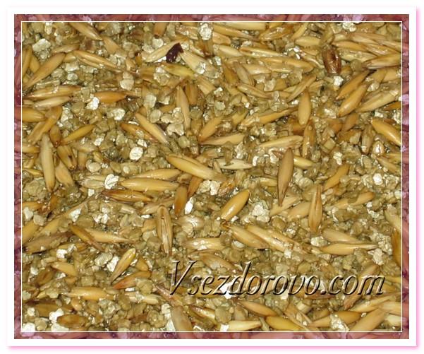 Замачиваем зерна с вермикулитом в воде