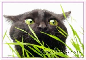 Черный кот и трава фото