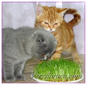 Котята интересуются зеленой травой