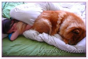 Женщина и собака спят на кровати фото