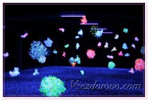 Бактерии в космосе