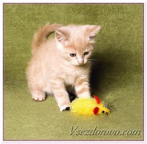 Котенок и мышка фото