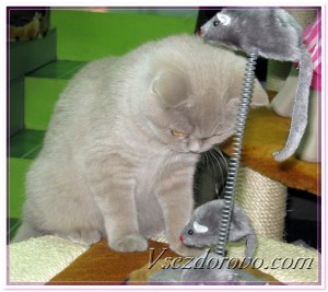 Котенок и мышки на пружине фото