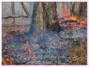 Лесной пожар фото
