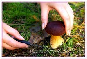 Съедобный гриб фото