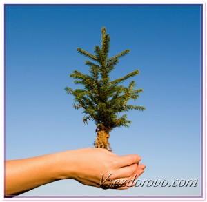 Дерево в руках фото