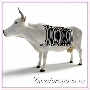 Искусственная мясная корова