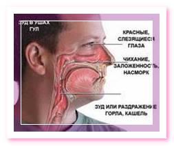 Схема проявлений аллергической реакции