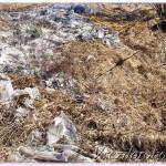 брошенный вами мусор в лесу может стать причиной огромного пожара