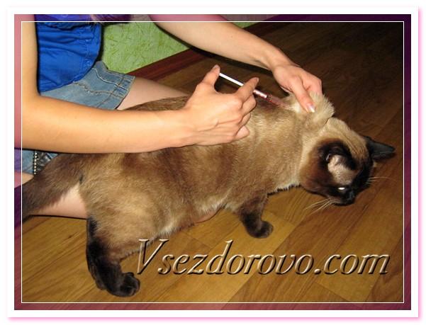 Как одному сделать укол кошке 582