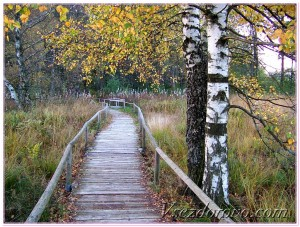 Осенний пейзаж фото