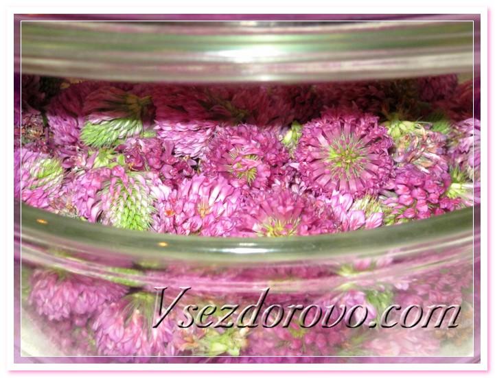промытые соцветия клевера укладываем в кастрюлю или же на решетку пароварки