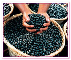 Асаи берри ягоды