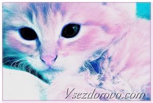 цветная кошка